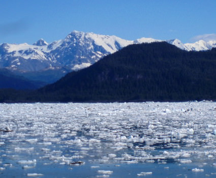 Glacial ice drifting across Prince William Sound