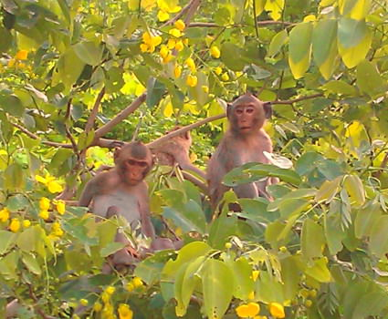 Monkeys in the trees watching bike tour go by