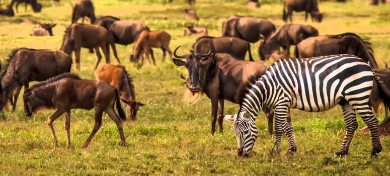 Wildlife in Serengeti national park