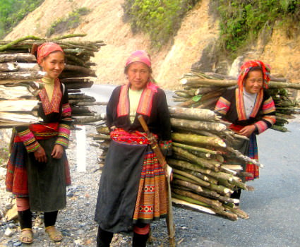 ethnic minority ladies carrying wood to the village